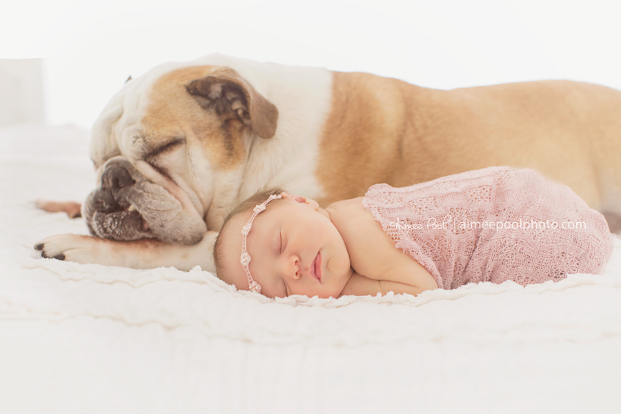 Newborn Baby and Dog | Aimee Pool Photography