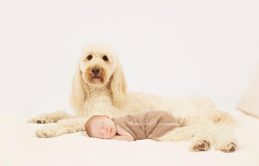 Newborn Baby and Dog | Aimee Pool Photography