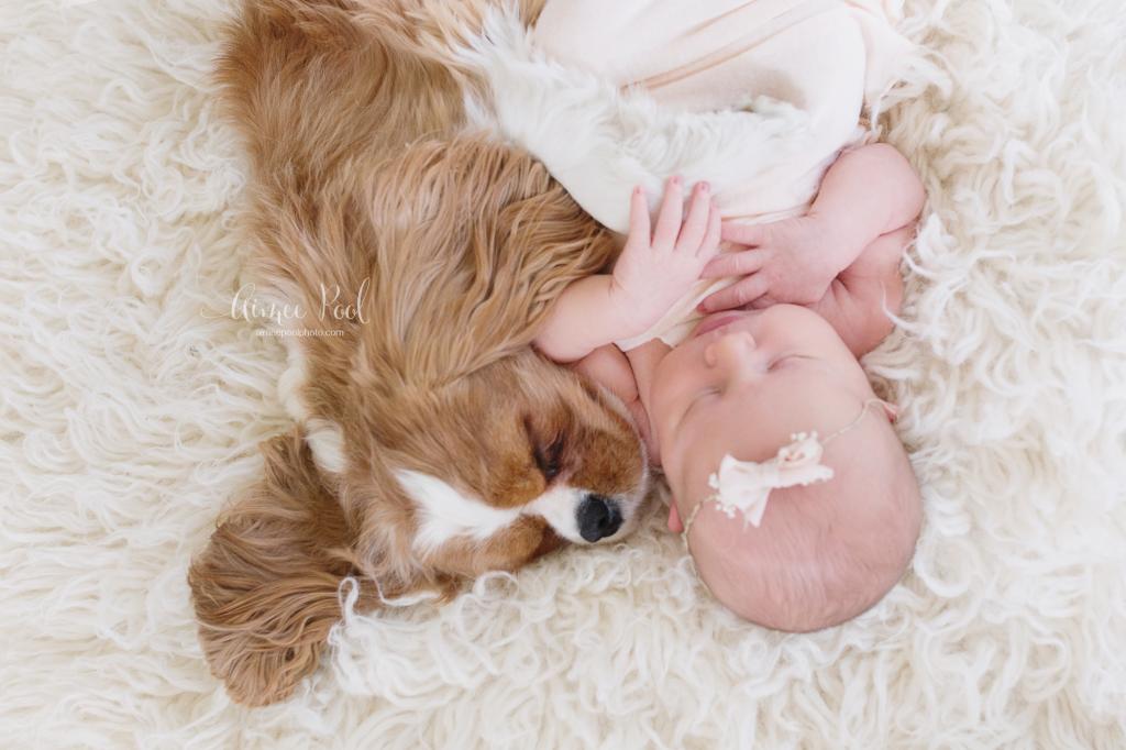 Newborn & Dog   www.aimeepoolphoto.com